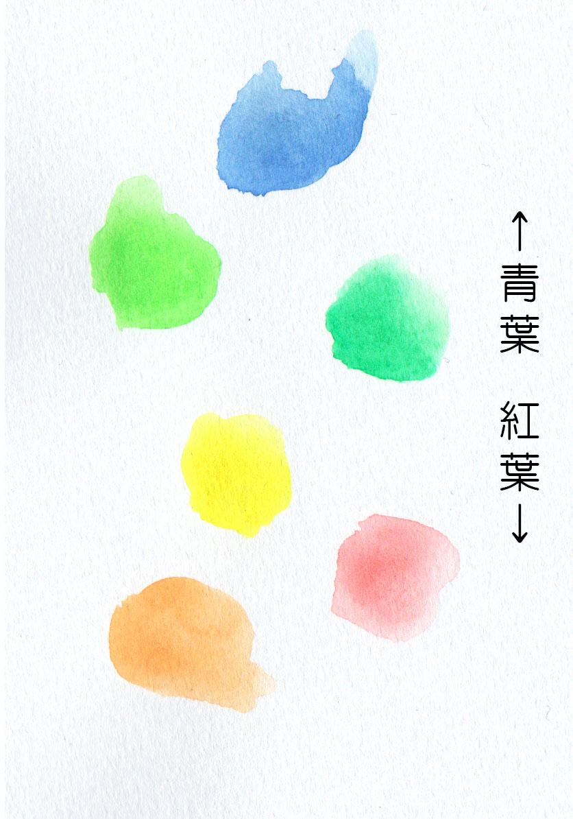 葉っぱの色の基本