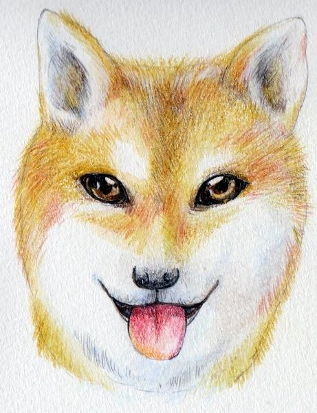 犬の毛の流れ描き方