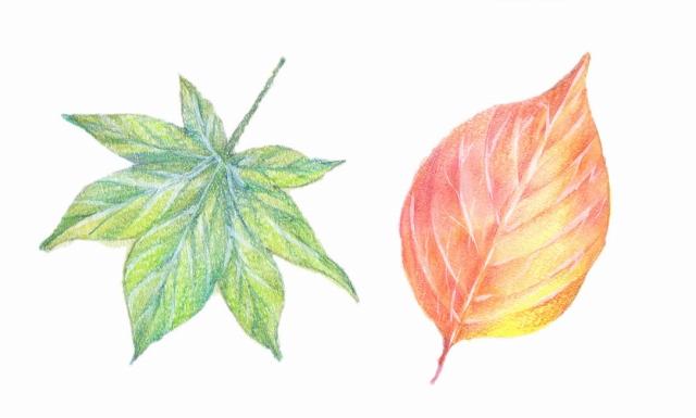 色の付け方や葉脈の表現方法