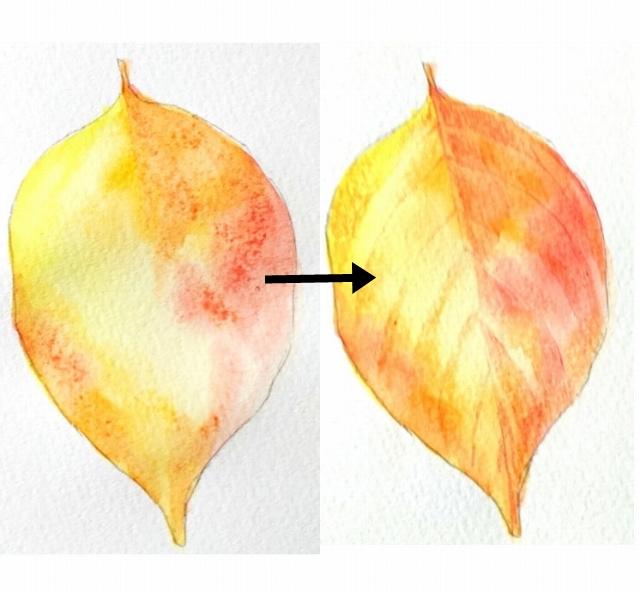 葉っぱの色の基本は黄色