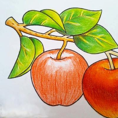 色鉛筆の色の乗せ方と塗る順番 ハイライト