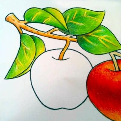 色鉛筆の色の乗せ方と塗る順番